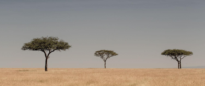 Serengeti, TZ