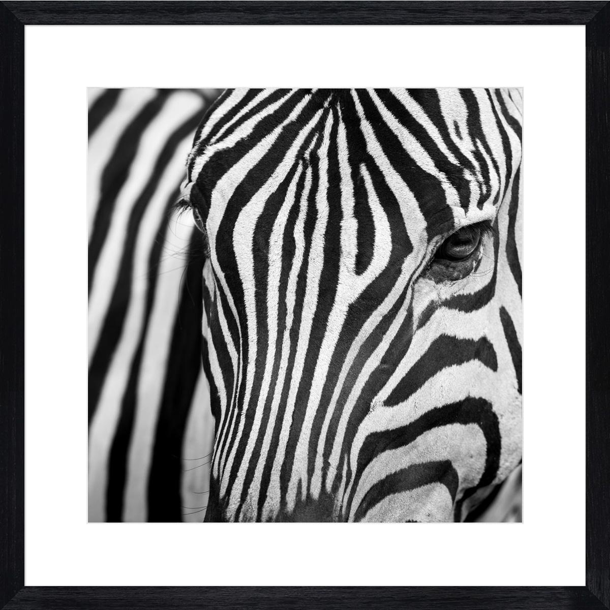 Zebra-I_black