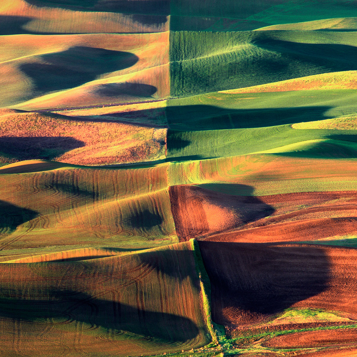 palouse quads