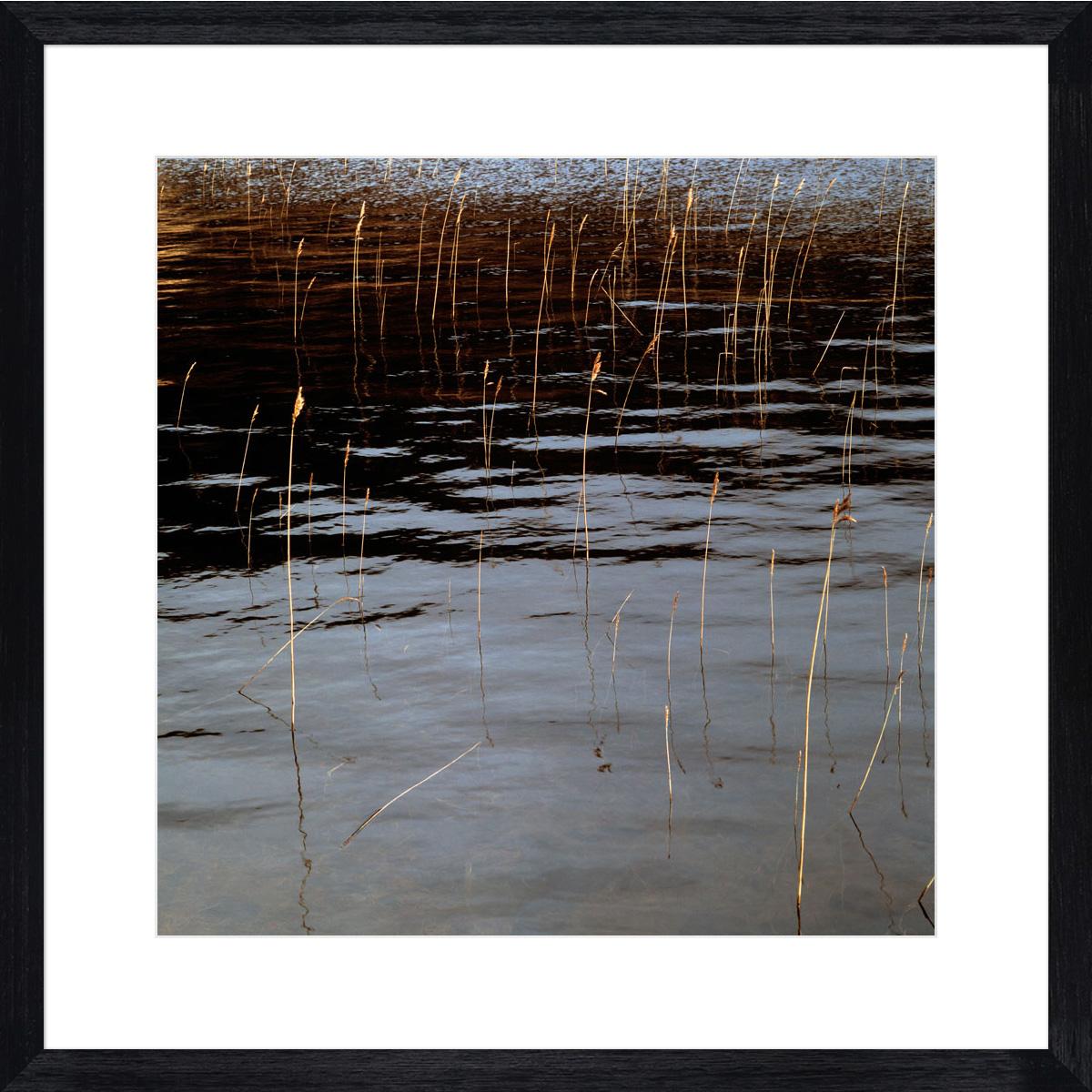 reeds_black