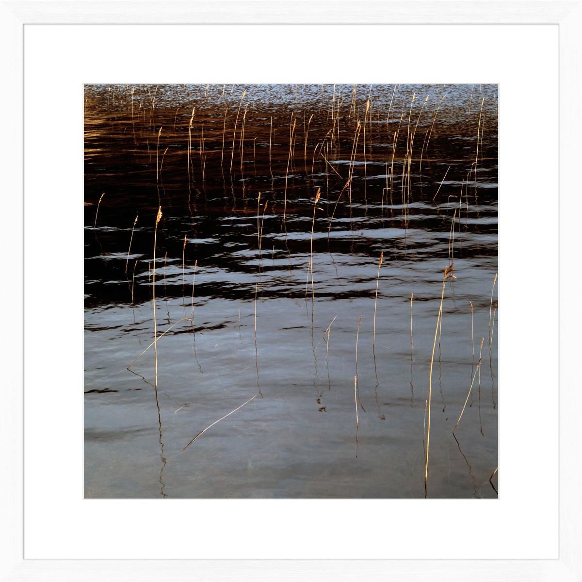 reeds_white