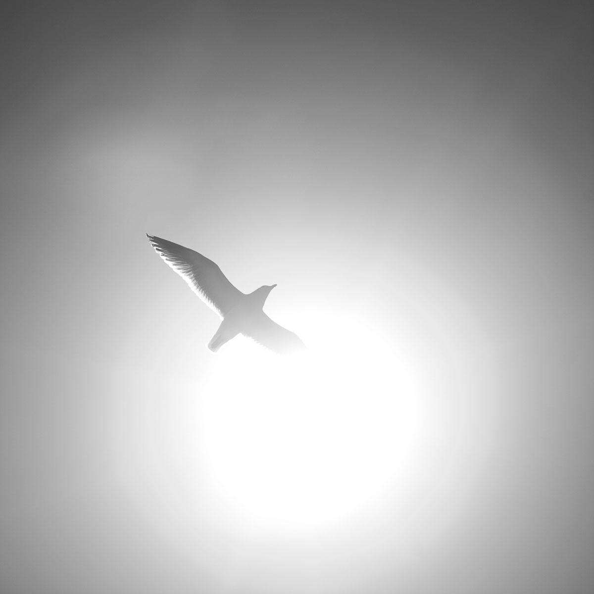 sunshine-seagull