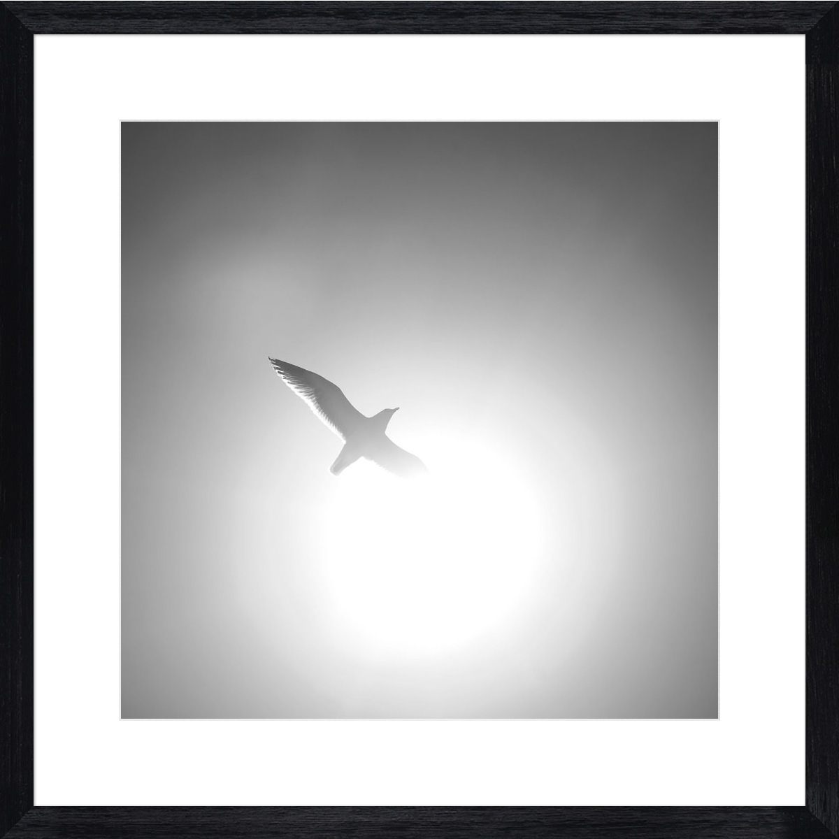 sunshine-seagull_black