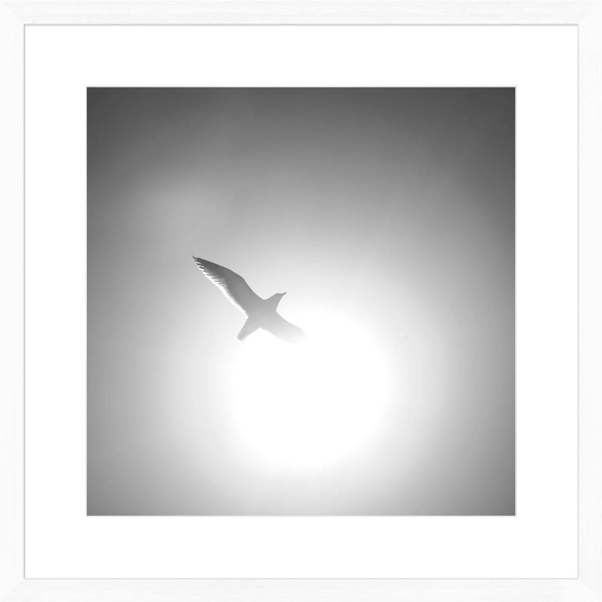 sunshine-seagull_white