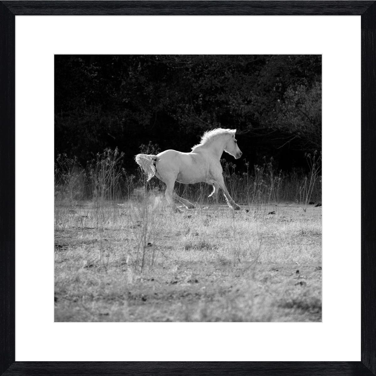 white-stallion-II_black