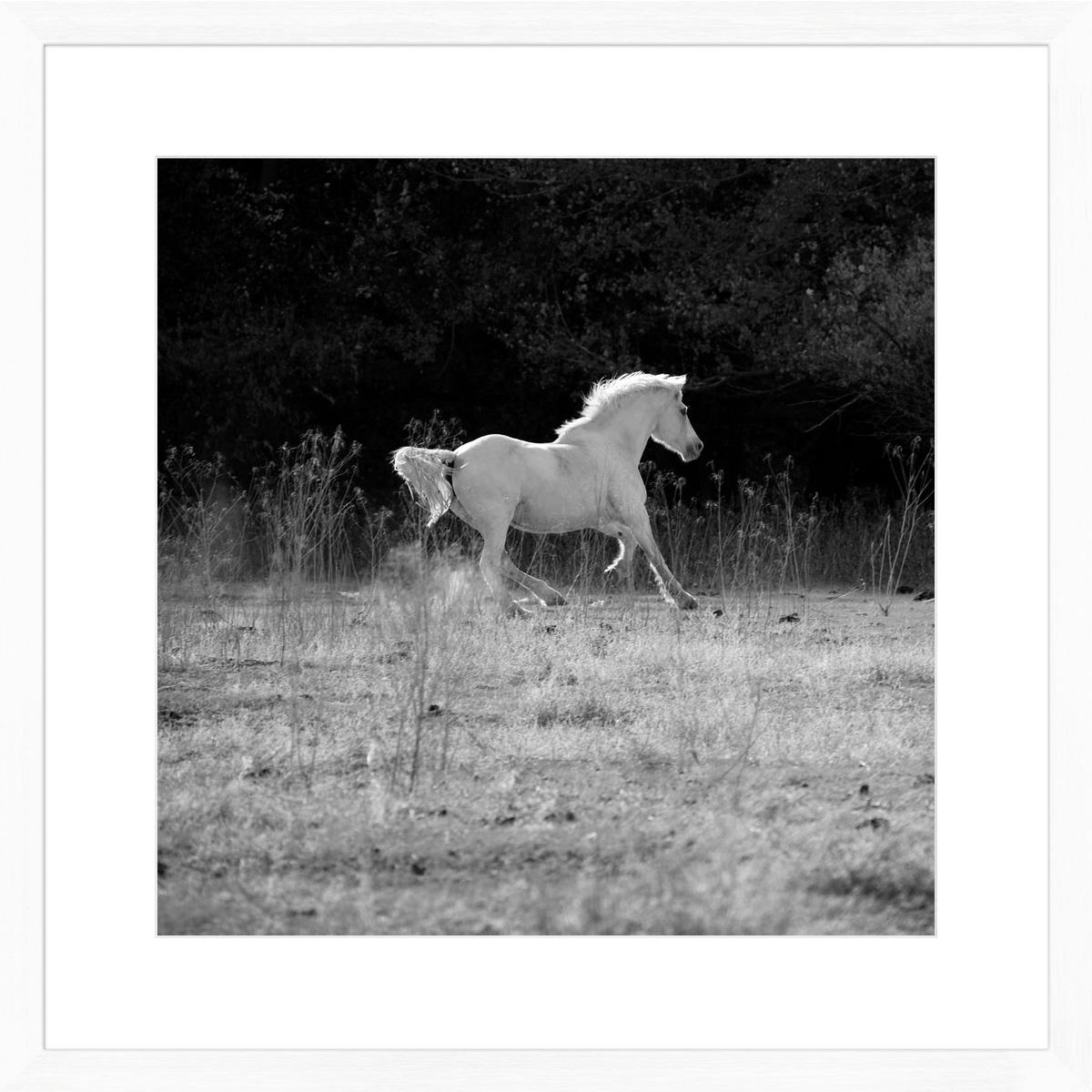 white-stallion-II_white