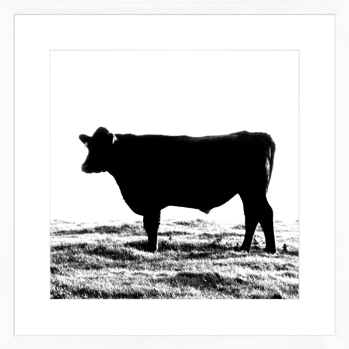 Cow_white
