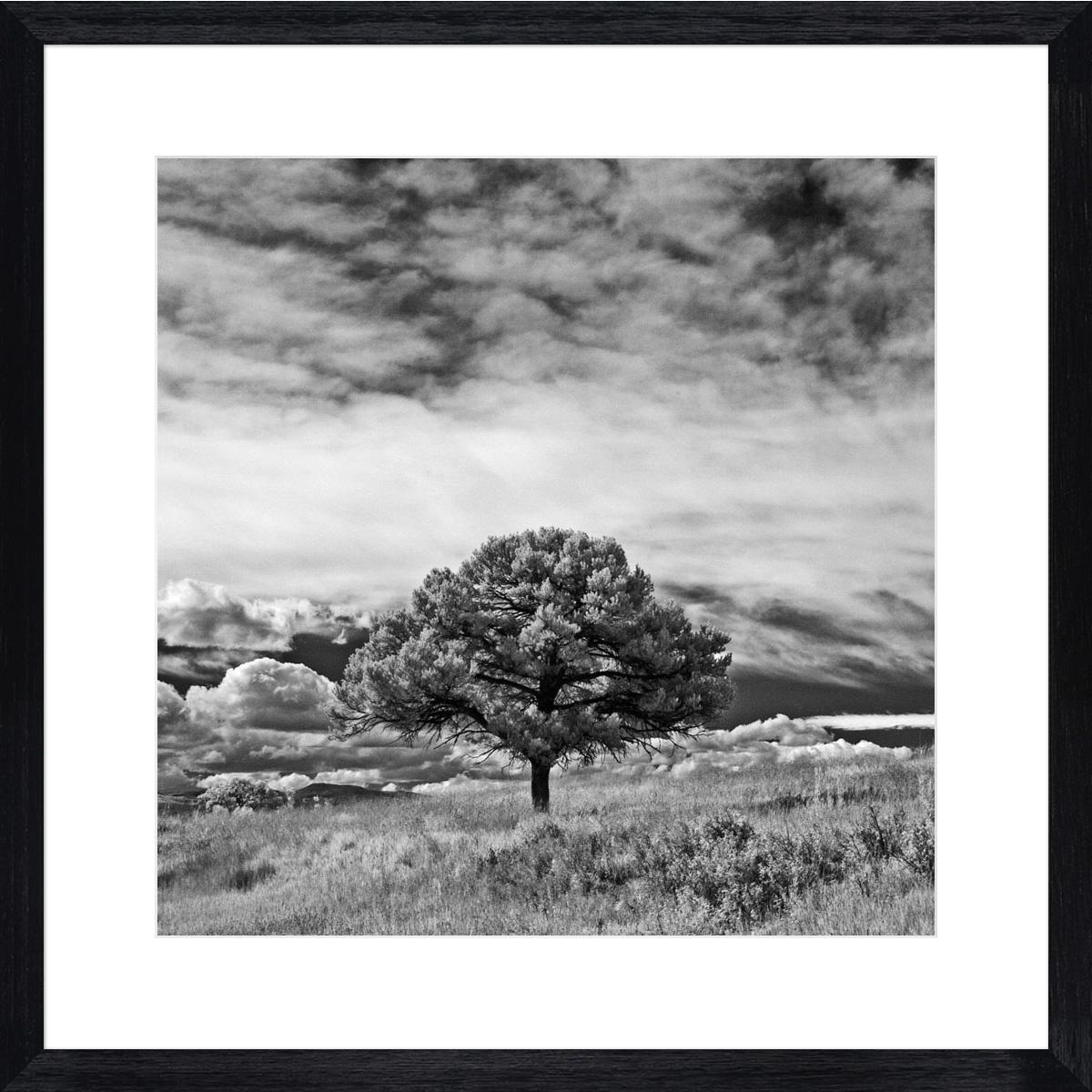 Lone-Tree-I_black