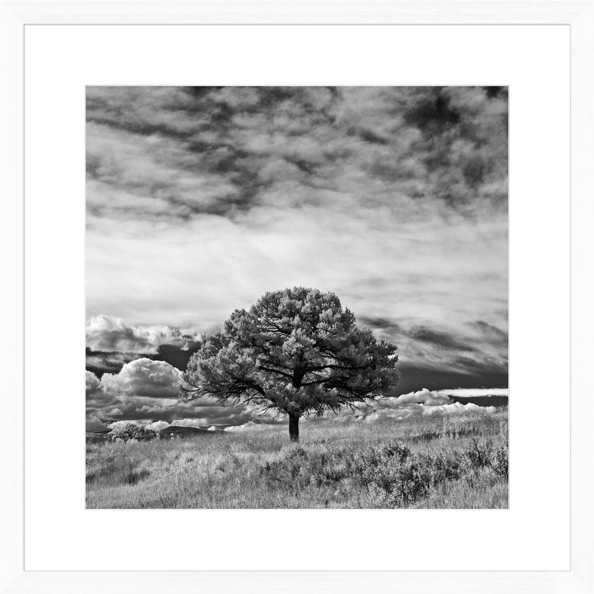 Lone-Tree-I_white