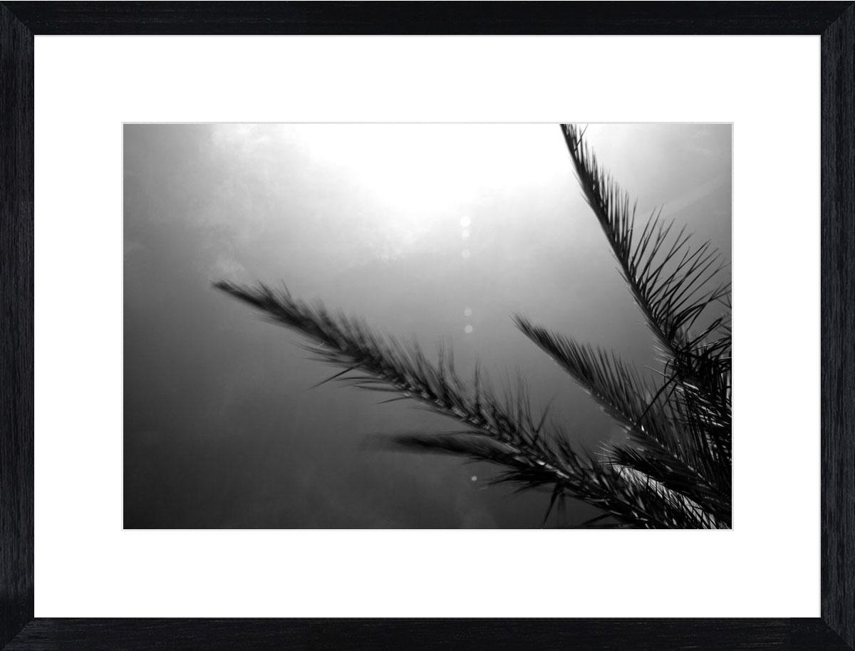 Palms-II_black