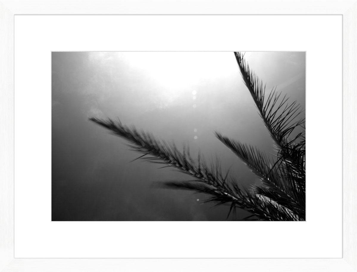 Palms-II_white