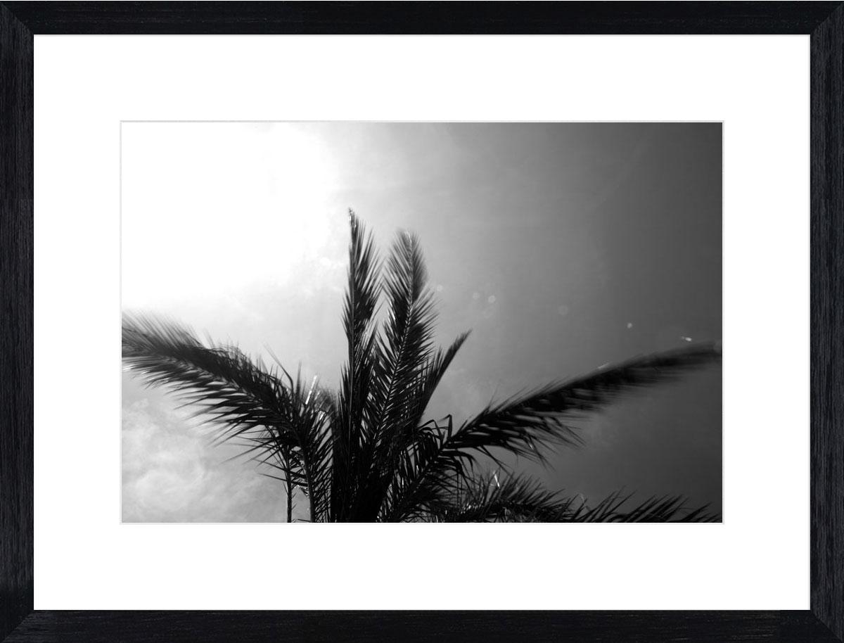 Palms-I_black