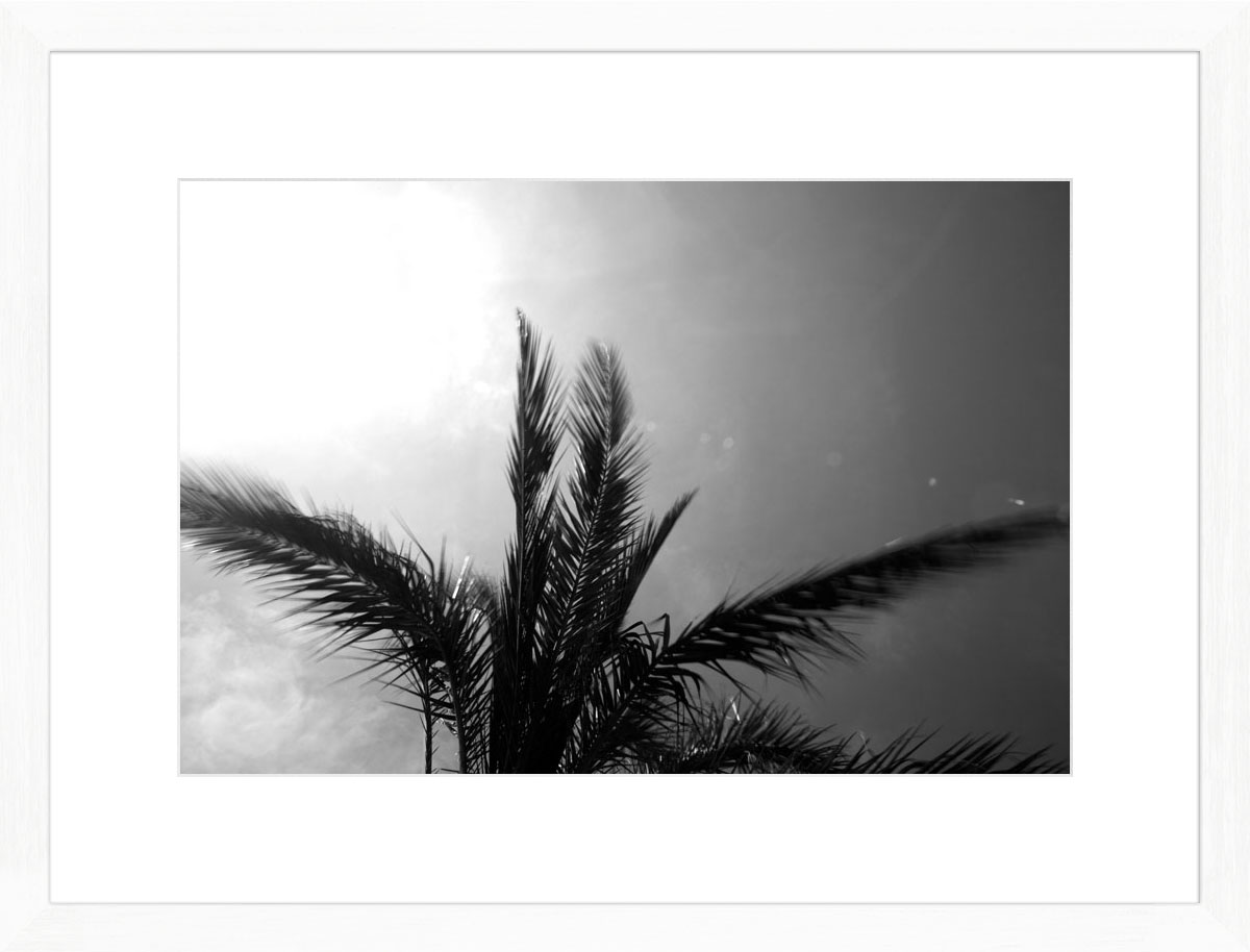 Palms-I_white
