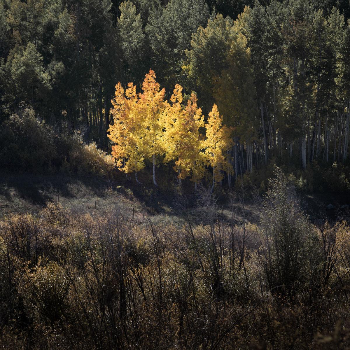 Kebler Colorado