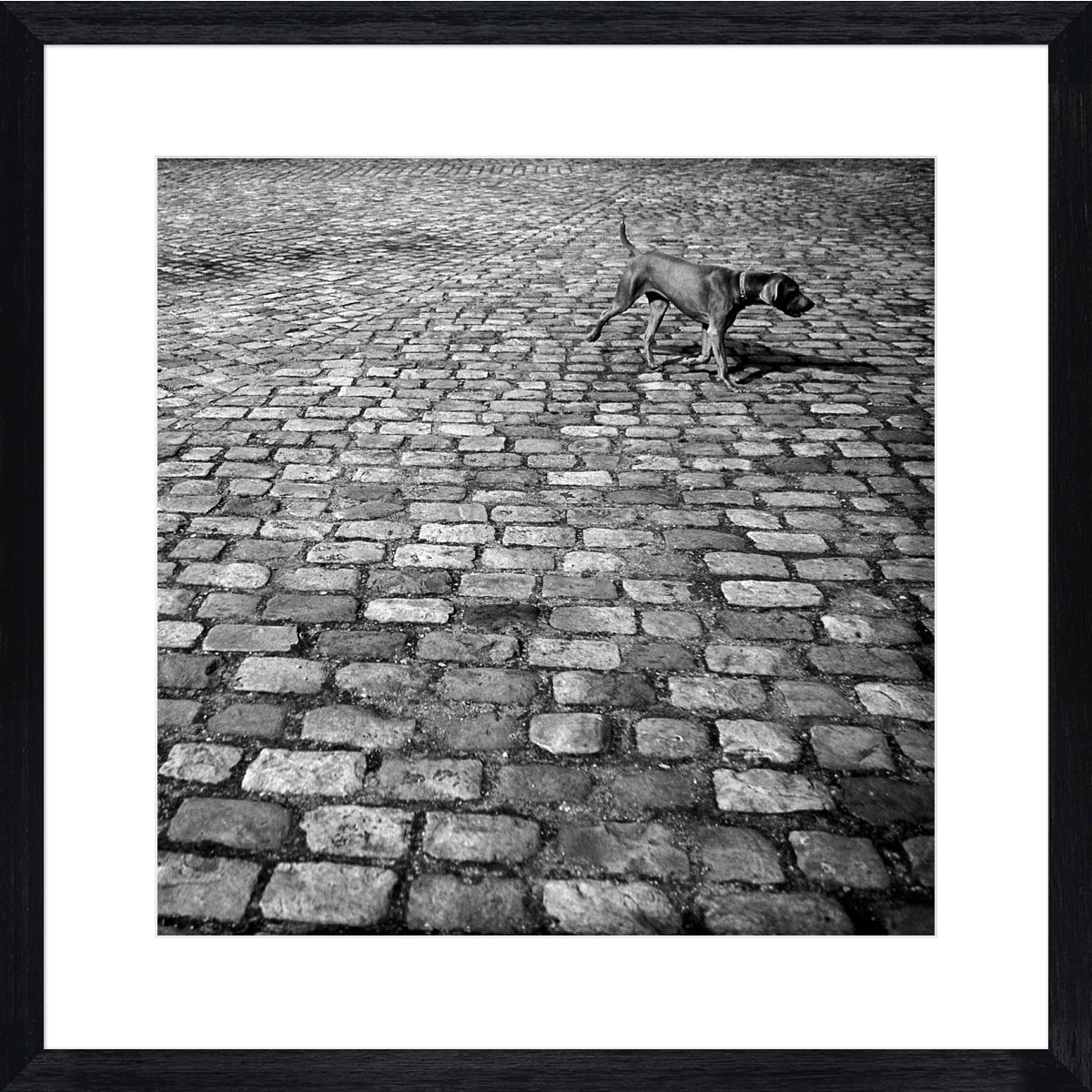dog-on-cobbles_black