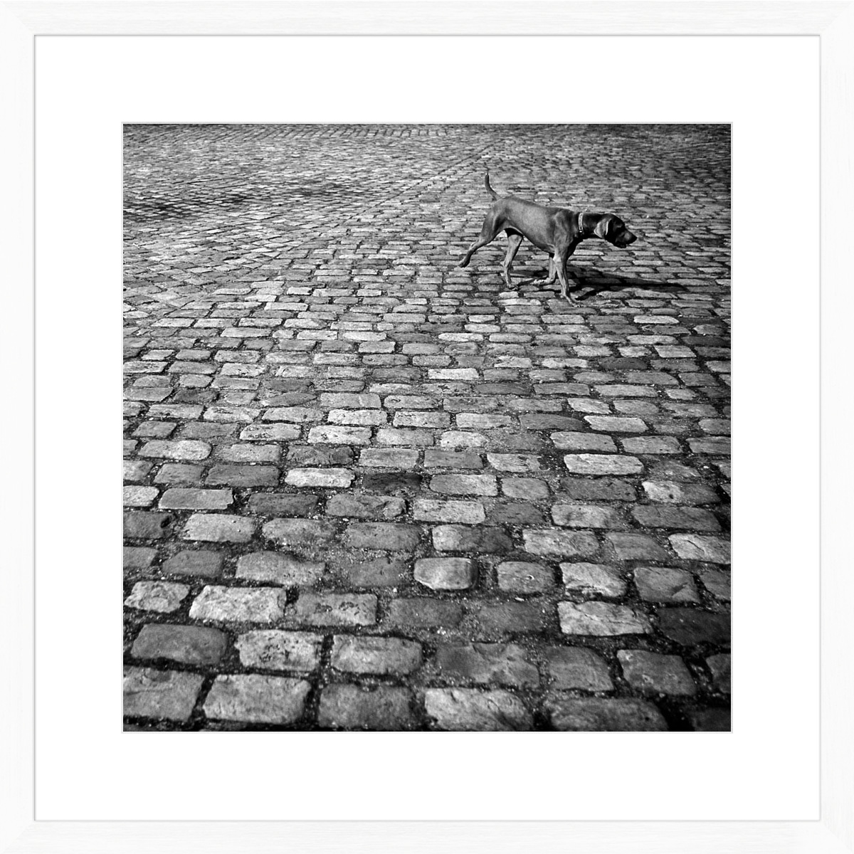 dog-on-cobbles_white