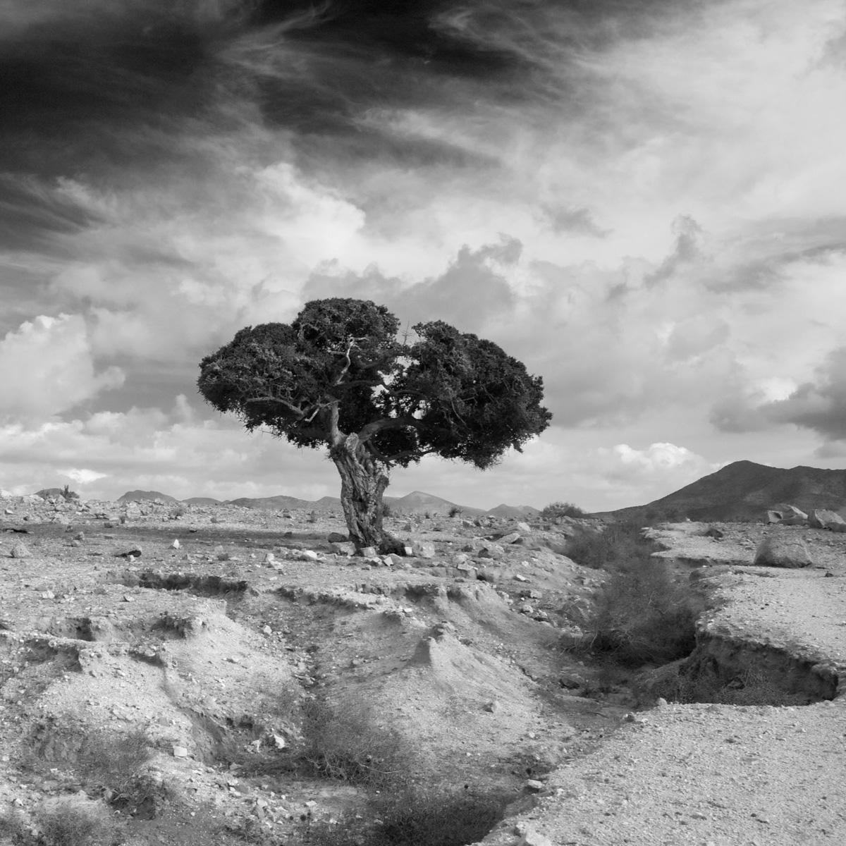 Moroccan-tree