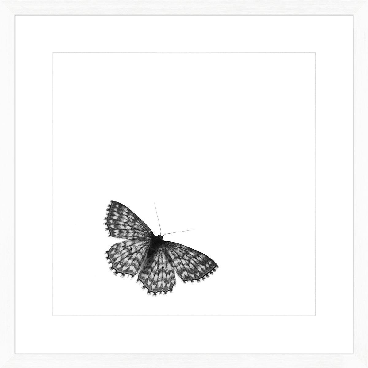 Moth_white