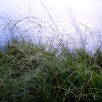 Richmond Grasses