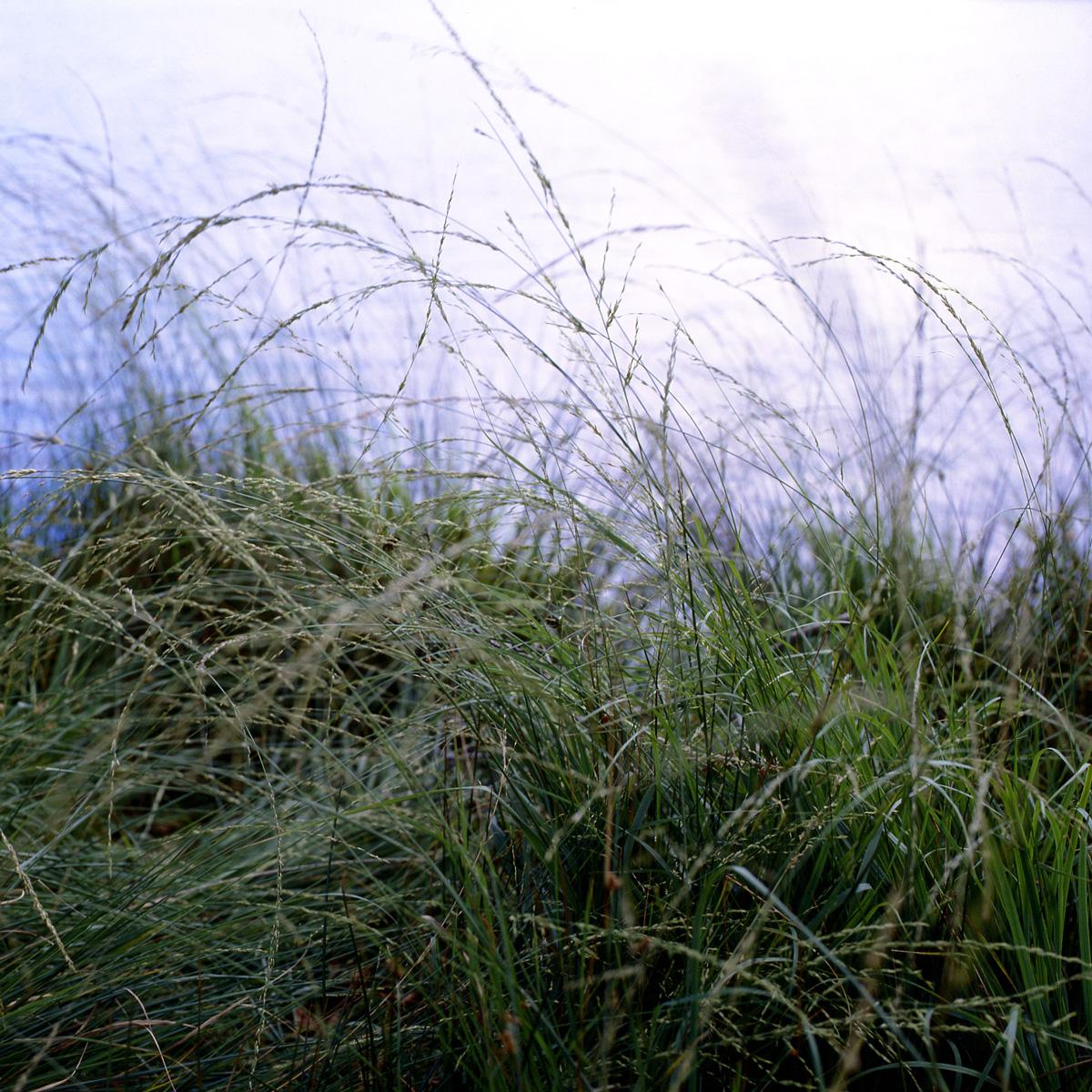 Richmond-grasses