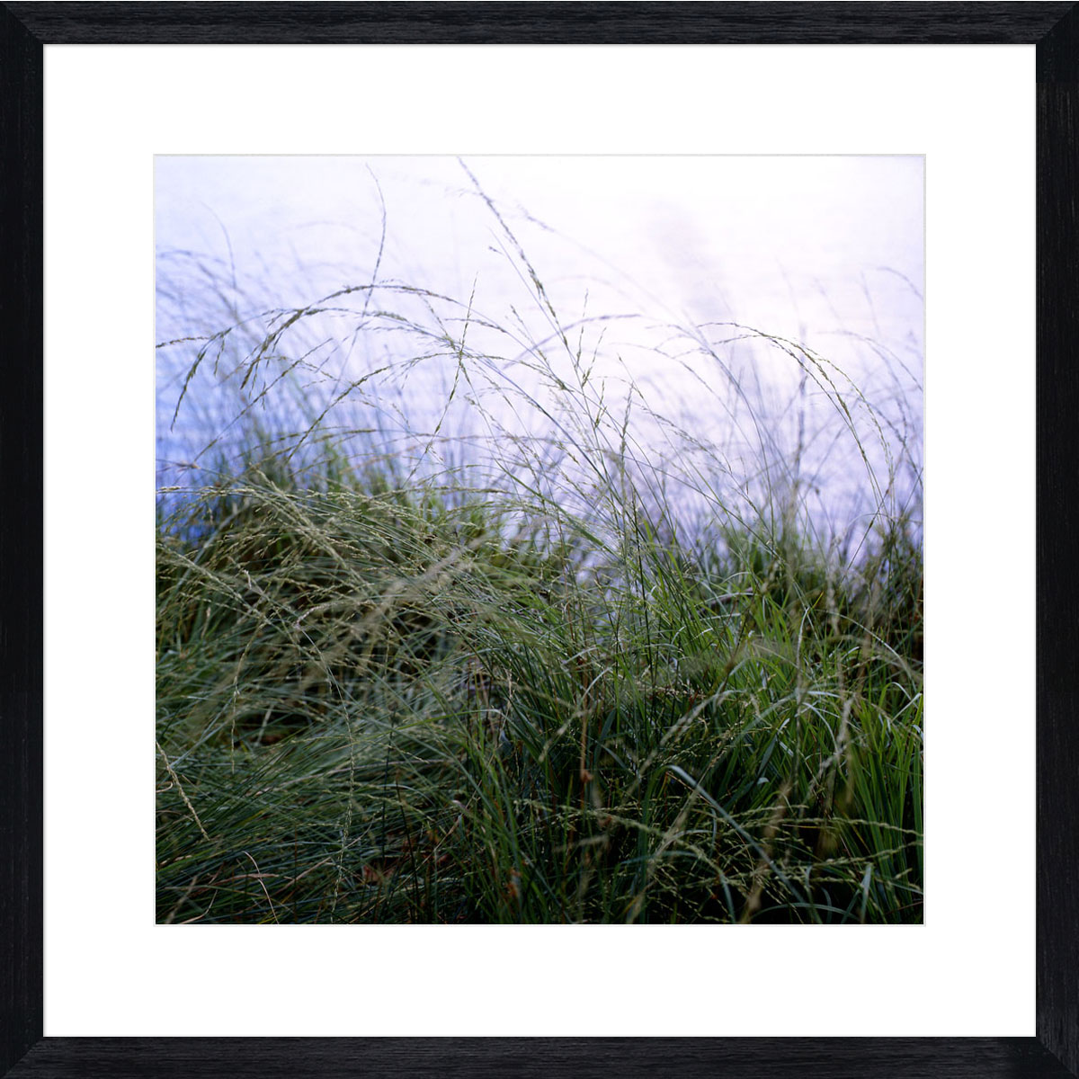 Richmond-grasses_black