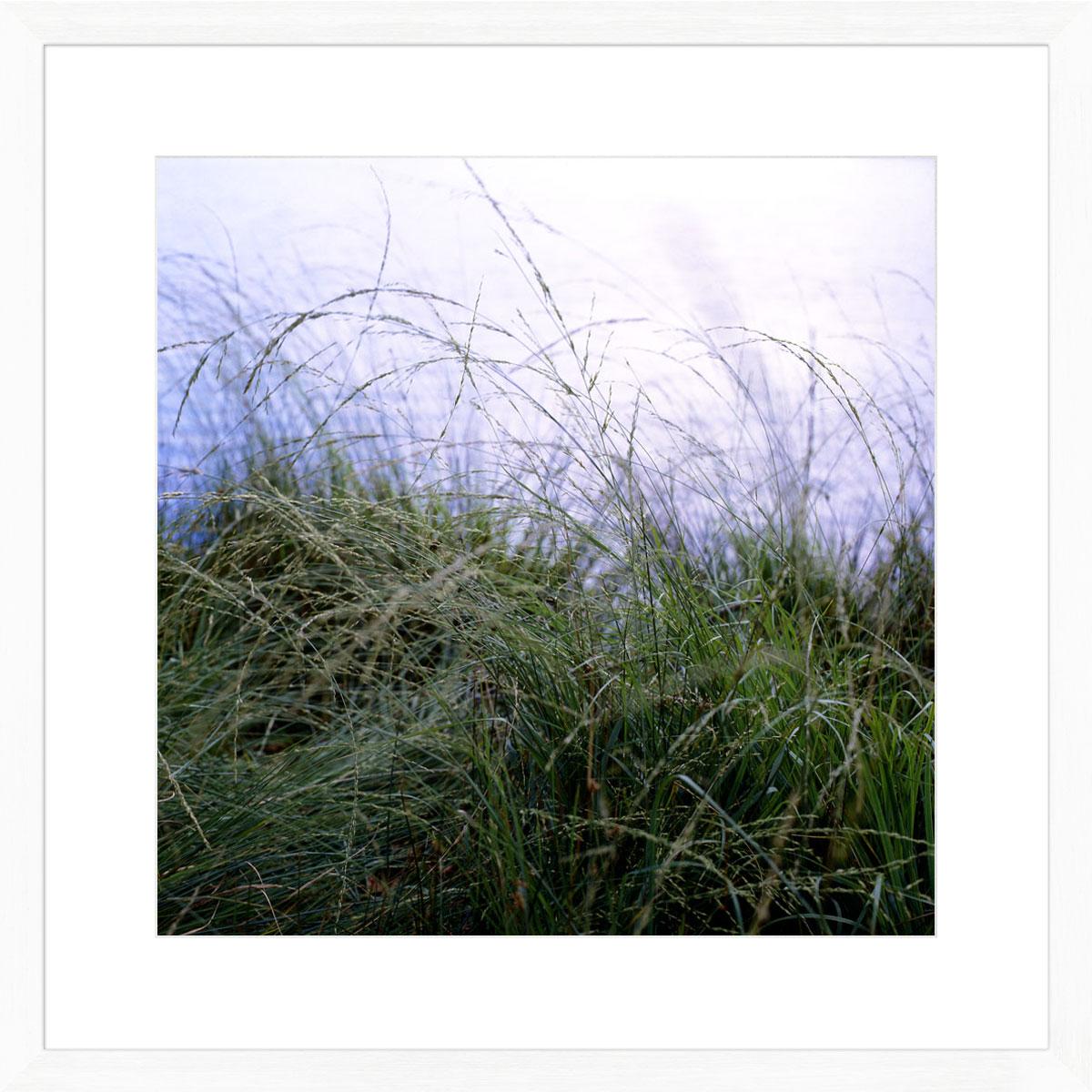 Richmond-grasses_white