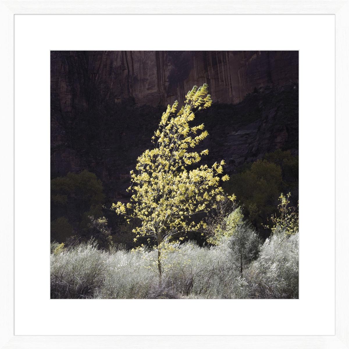 Bling-photographic-print-white