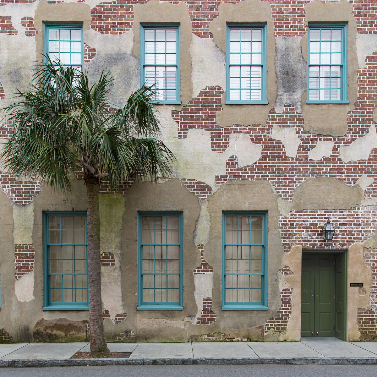 Charleston_palm_tree_photographic_print_art