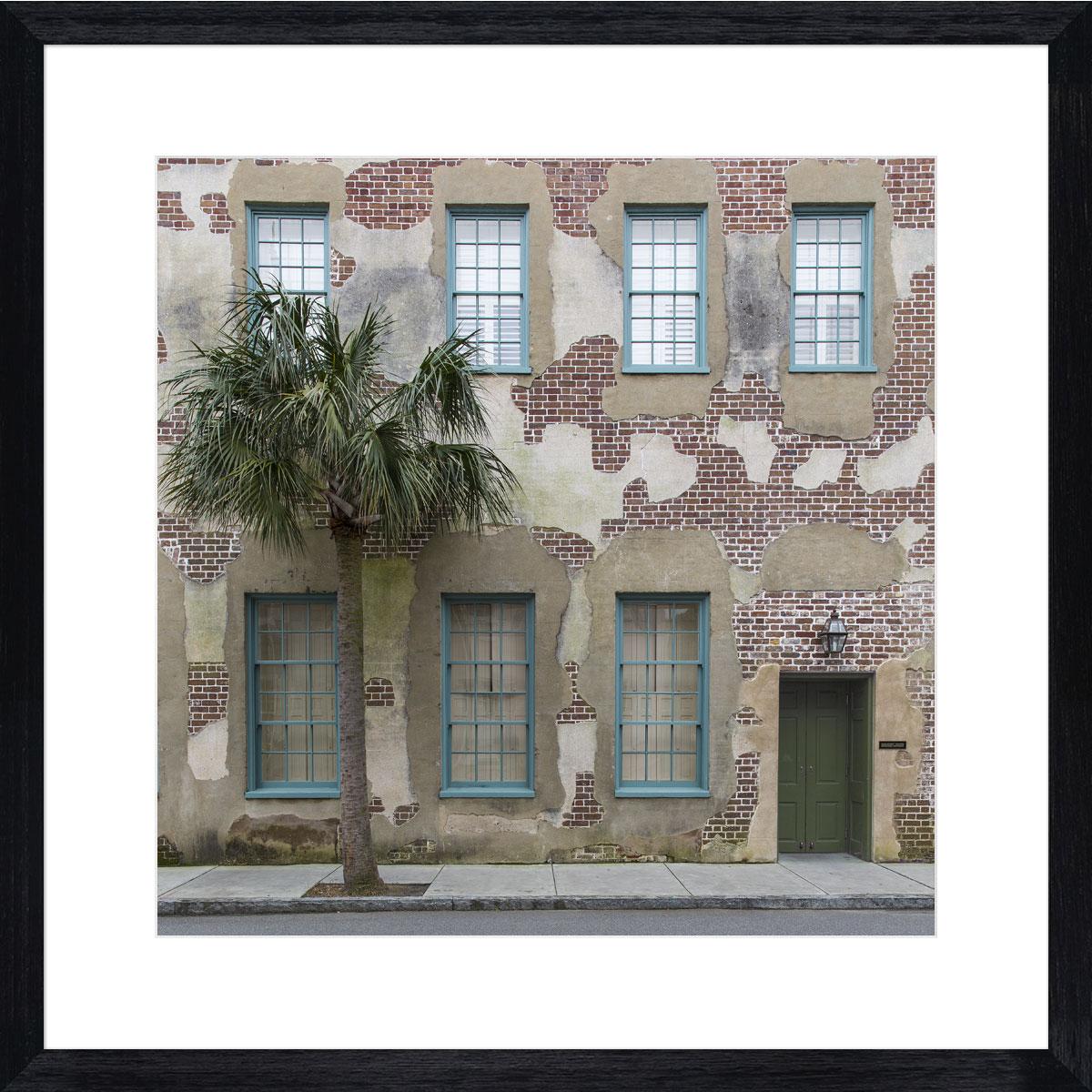 Charleston_palm_tree_photographic_print_art_black