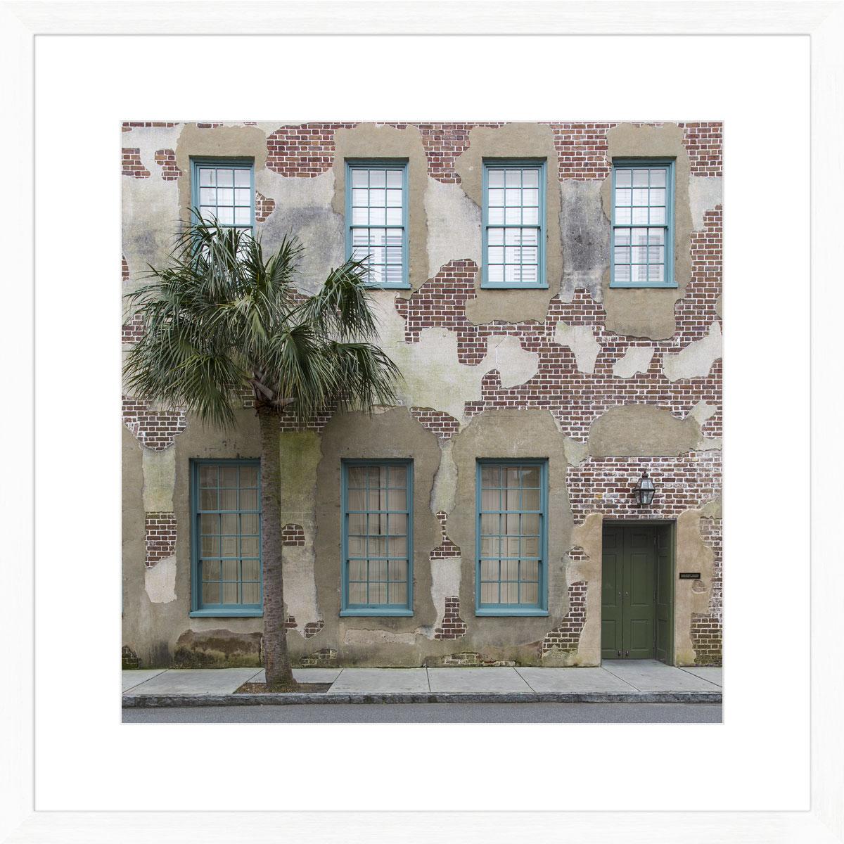 Charleston_palm_tree_photographic_print_art_white