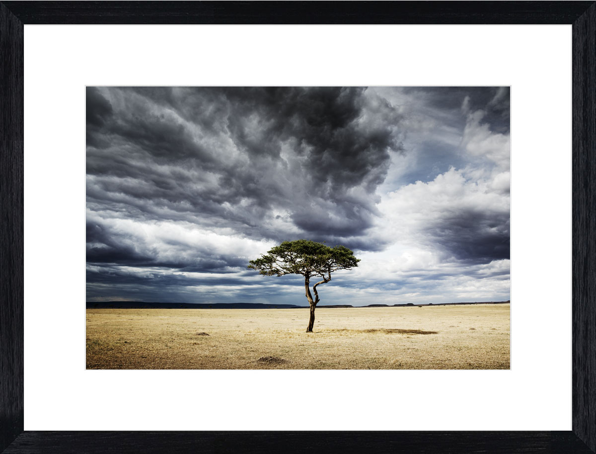 Serengeti_acacia_photographic_print_black
