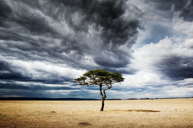 Serengeti-Acacia