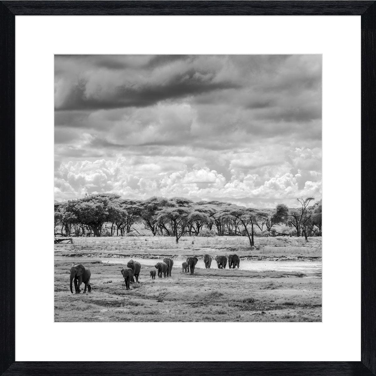 elephants-ruaha-photographic-print-black