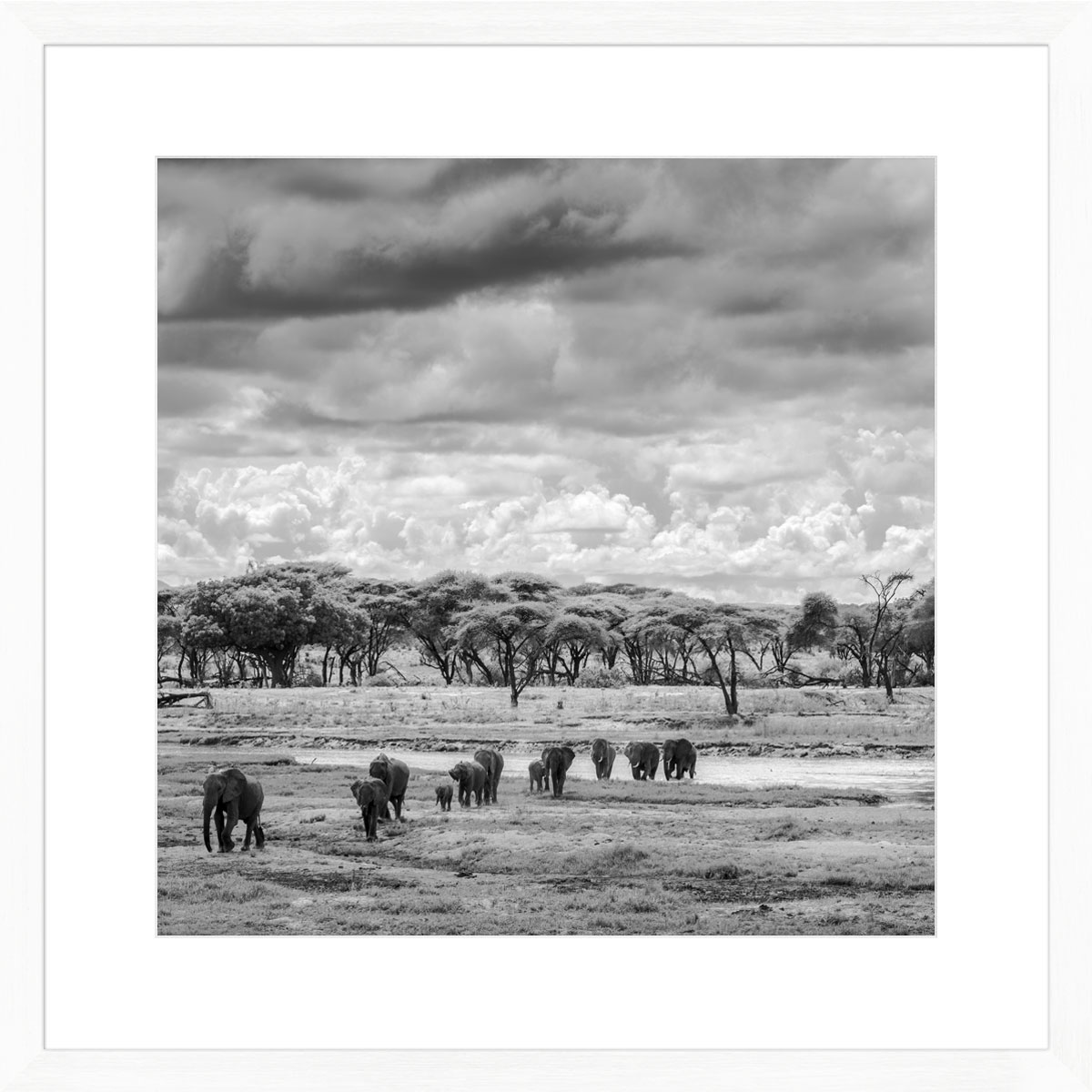 elephants-ruaha-photographic-print-white