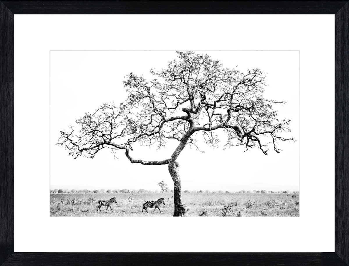 mikumi-tree-photographic-print-black