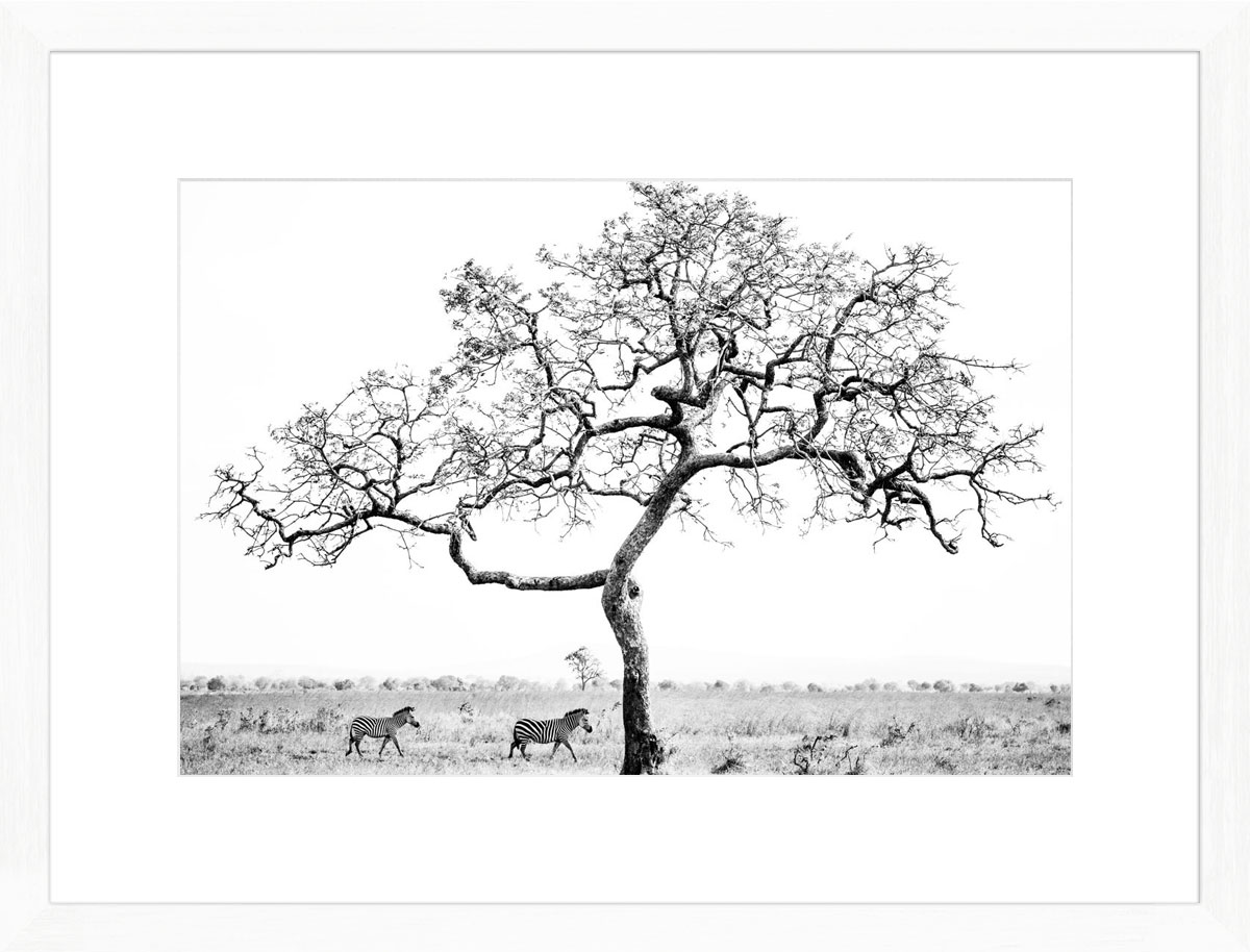 mikumi-tree-photographic-print-white