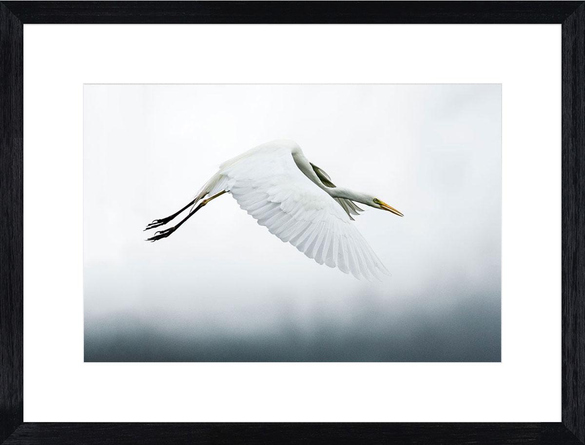 stork-photographic-print-black