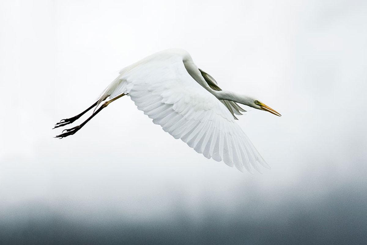 stork-photographic-print