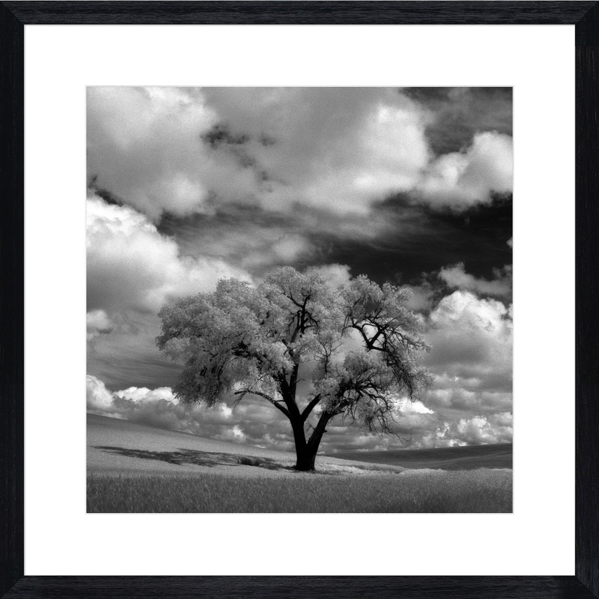Palouse-tree-photographic-print-black