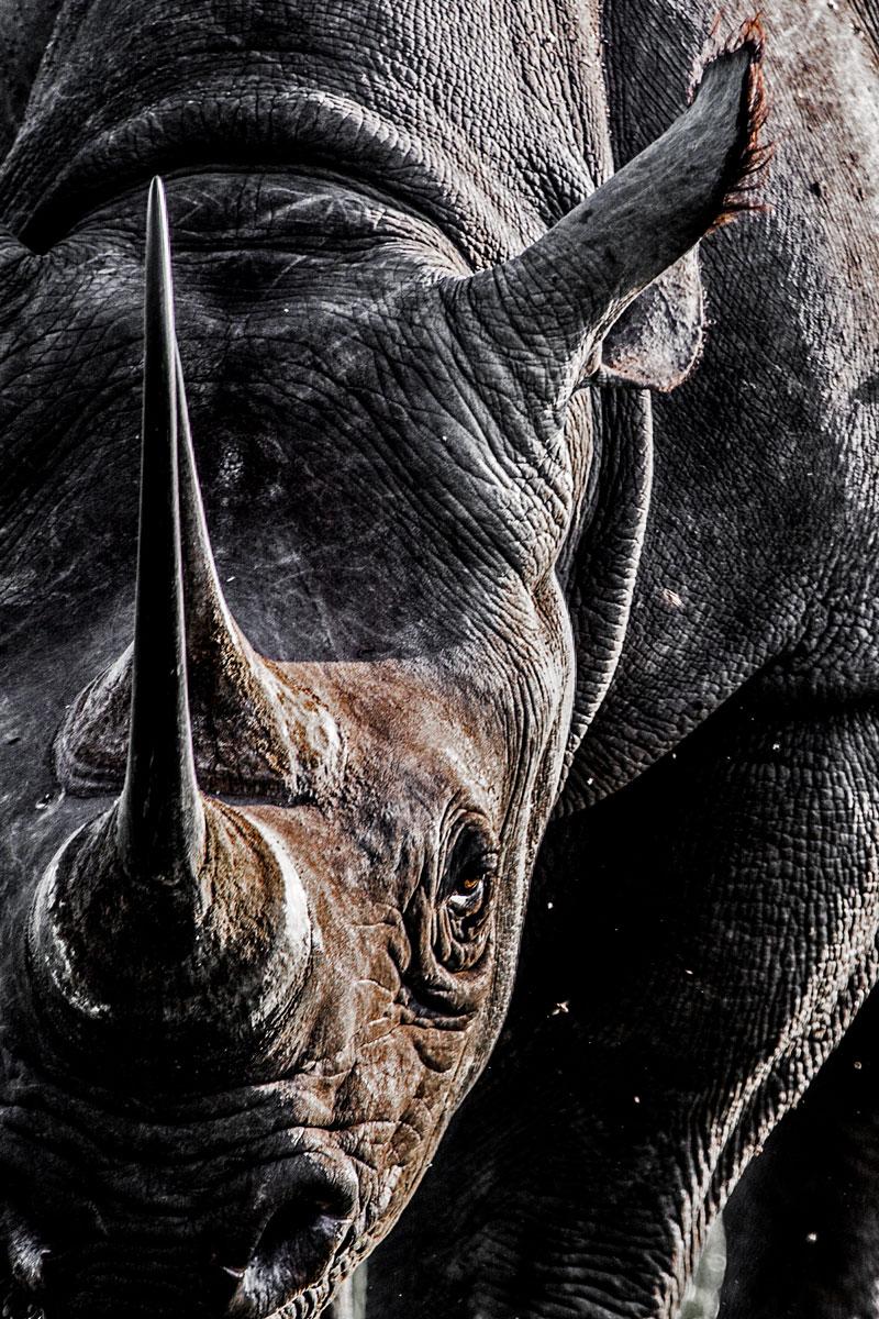 Rhino_photographic_print