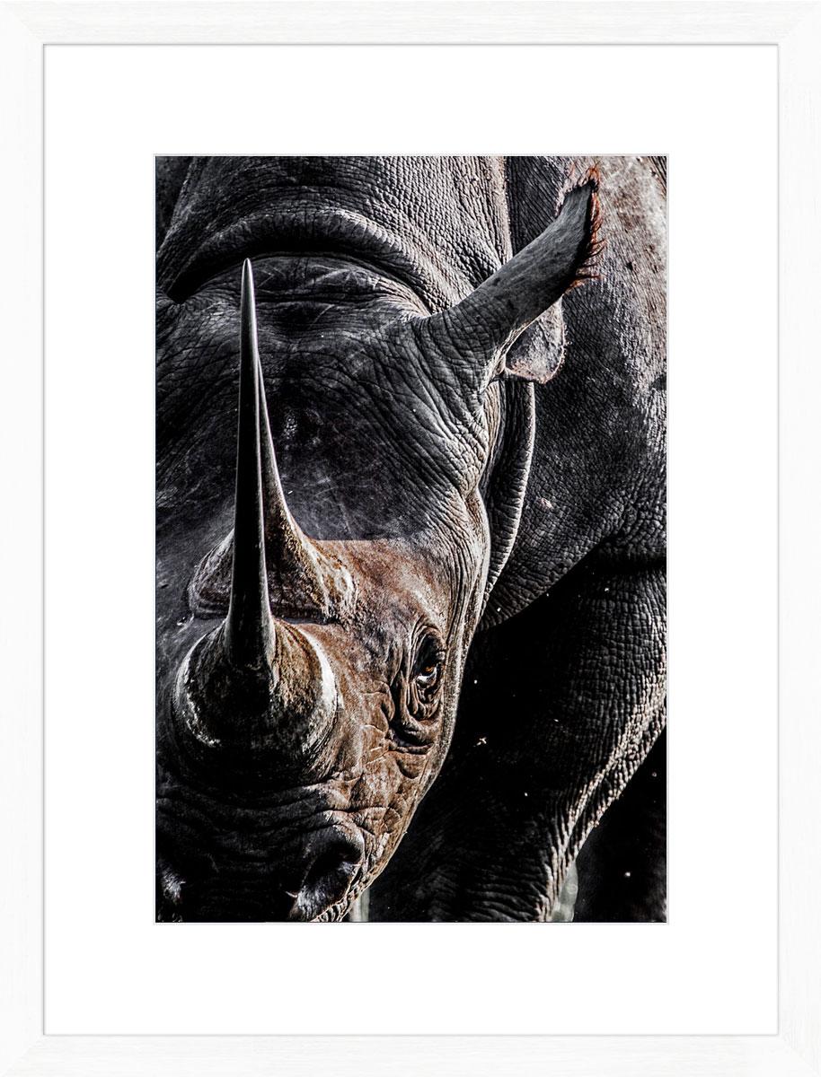 Rhino_photographic_print_white