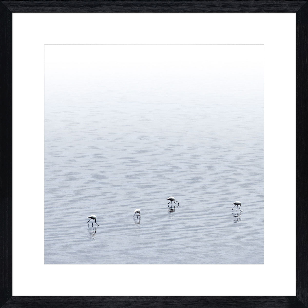 Flamingos-photographic-print-black