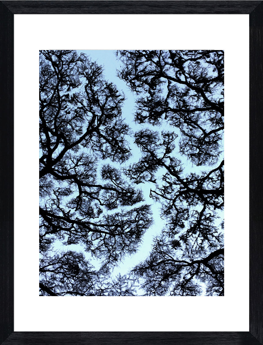 Acacia_rivers_photographic_print_black