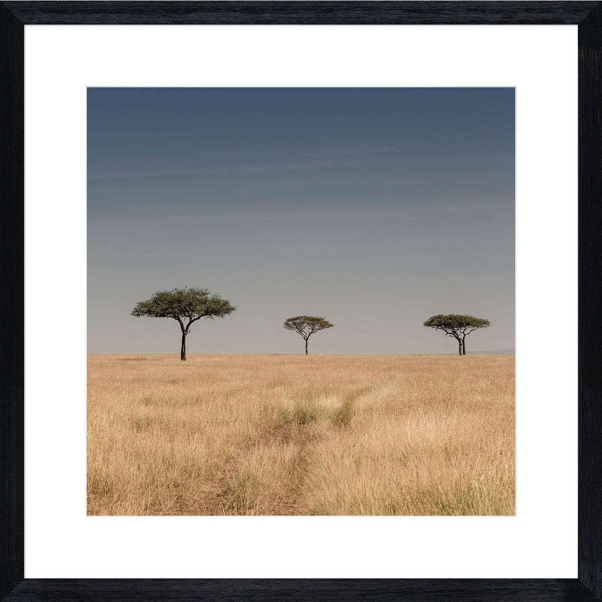 Serengeti Planes, 3 lone trees