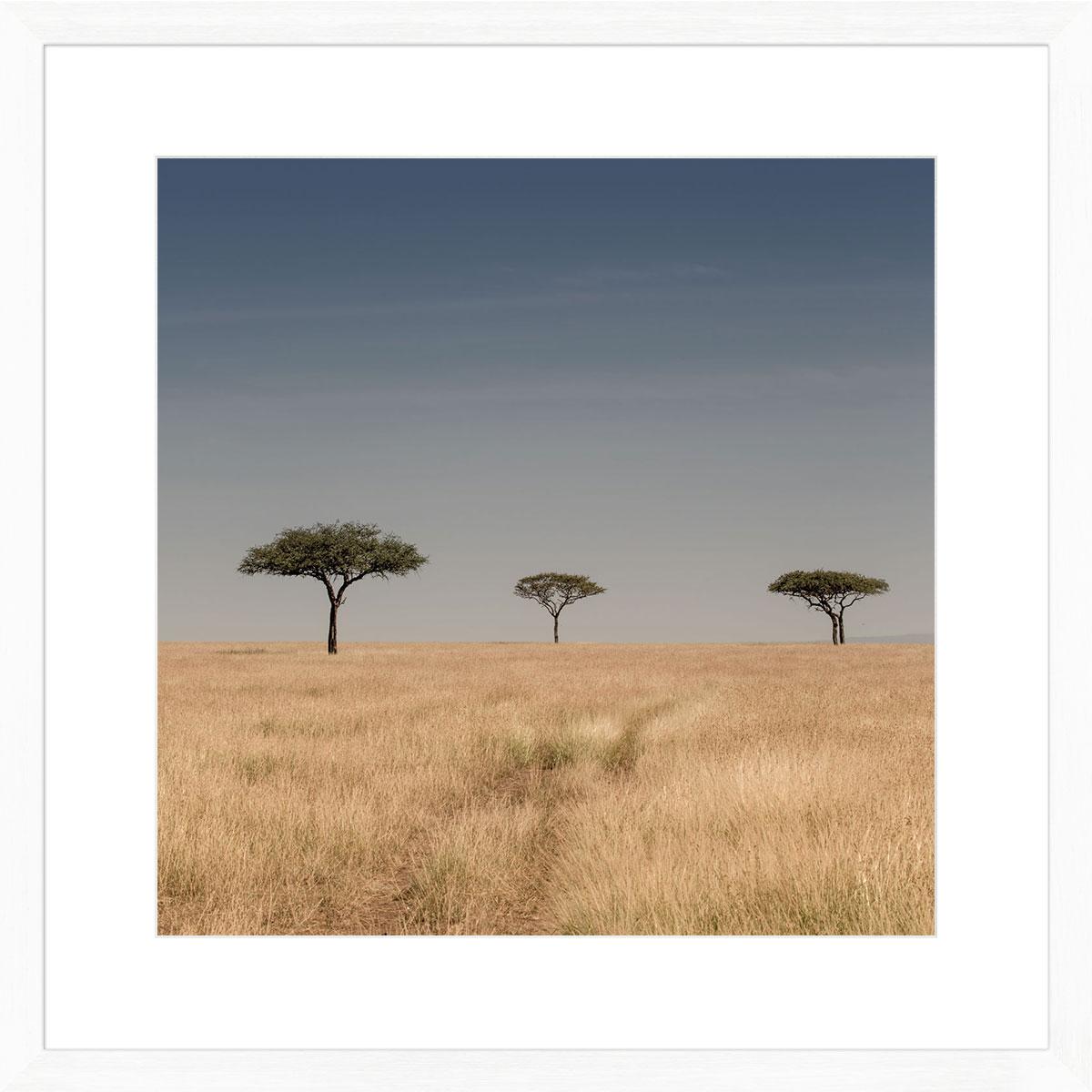 3-lone-trees-Serengeti-art-print-white-frame
