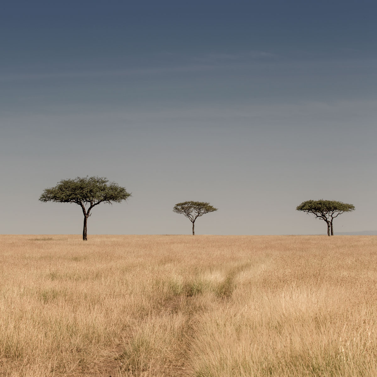 3-lone-trees-Serengeti-art-print