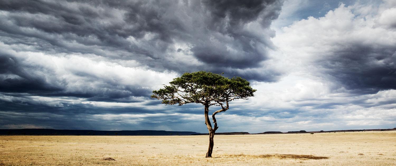 Serengeti Acacia in storm