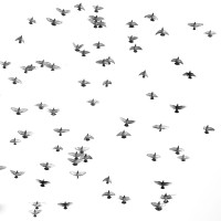 Flight in White